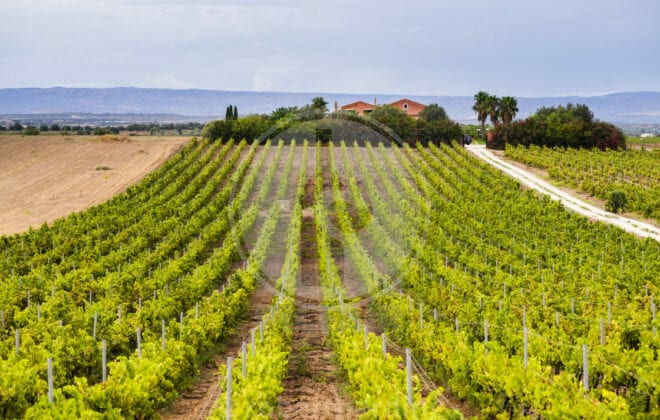 strada del vino del val di noto