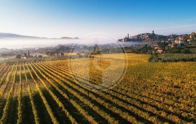 strada del vino terre di arezzo 1